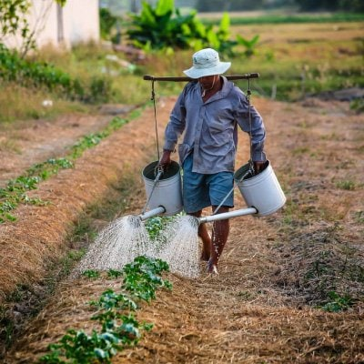 Agriculture Sector in Sri Lanka