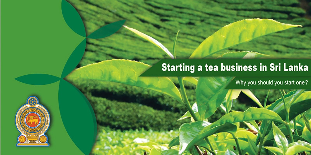 Starting a tea business in Sri Lanka why you should start one?